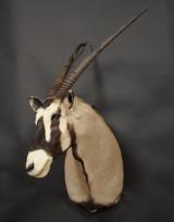 Skuldermonteret, Oryx, jagttrofæ