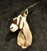 Oryx trofæ