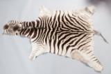 Zebra Fell mit Kopf, Mähne und Schwanz
