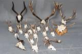 Samling diverse skalmonterede jagttrofæer (23)