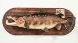 Salmon cast, 22.9 kg, by Åke Bursell