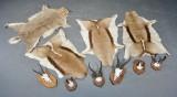 Samling skind & skalmonterede jagtrofæer bl.a. Springbuck m.m. (10)