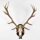 Dyrekranium, hjortegevir på trofæplade af træ, med medalje
