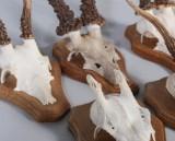 Jaktroféer, rådjurs- och älghorn (6)