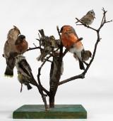 Fågelträd, 11 fågler