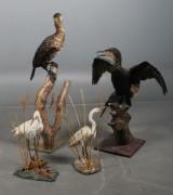 Fem udstoppede havfugle, b.la skav. (5)