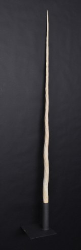 Narwhal tusk, length approx. 229 cm