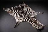 Zebra skind fra Tanzania