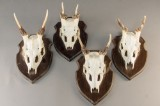 Fire skalmonterede jagttrofæer (4)