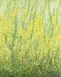 Antoine Klinkhamer, Öl auf Leinwand, 'yellow flowers'
