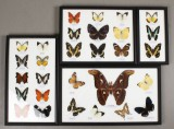 Samling sommerfugle (4)
