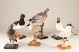 Udstoppede fugle (6)