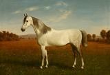 Carl Bøgh. Portræt af skimlet hest