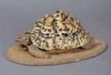 Udstoppet leopardskildpadde
