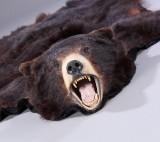 Hovedmonteret bjørneskind fra en brun bjørn