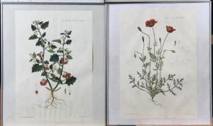 Lækker Flora Danica. Fire indrammede litografiske tryk (4) | Lauritz.com WJ-22