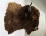 Bison, præparat, hoved-skulder-montering