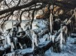 Tage Klee, 'Istapper på Rone Klint'