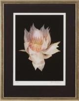 Joyce Tenneson pigmentprint