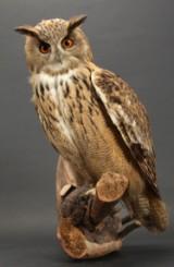 Large Eurasian eagle-owl