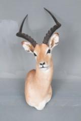 Jagttrofæ af skuldermonteret impala (Aepyceros melampus)