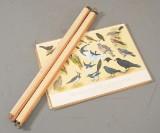 Plancher med fugle samt to tavler / kort m/ fisk, 1900-tallets 2. halvdel (7)