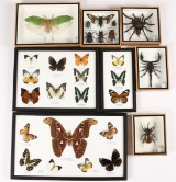 Samling insekter, sommerfugle m.fl. (8)