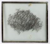 Objektkunst mit Pflanze