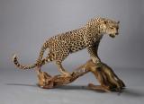Udstoppet leopard med abe