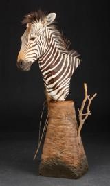 Hartmann Zebra. Skuldermonteret på stand