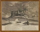 Ridinger Die Rennthier 1736