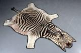 Zebraskind. 315 x 175 cm.