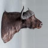 Jagttrrofæ: Skuldermonteret bøffel