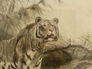 graphiken wilhelm kuhnert 1865 1926 tiger in landschaft kaltnadelradierung. Black Bedroom Furniture Sets. Home Design Ideas