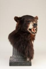 Bustemonteret sortbjørn