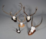 Opsatse. Waterbuck m.fl. (5) Denne auktion er annulleret - se nu vare #1930100