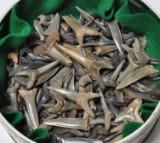 Samling fossile hajtænder(250)